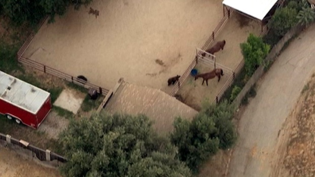 [LA] Bear Surprises Horses in Southern California Neighborhood