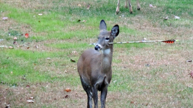 [NY] Deer With Arrow Through Head Seen Roaming in New Jersey