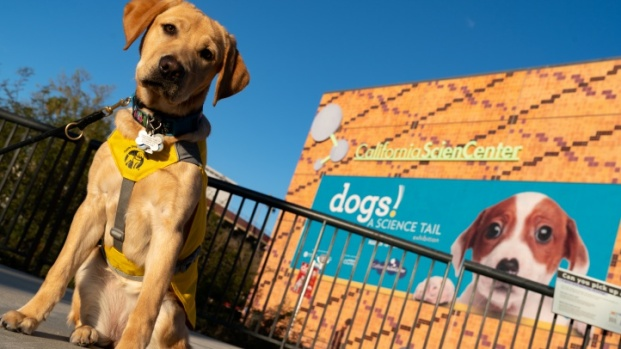 'Dogs! A Science Tail' Woofs at the California Science Center