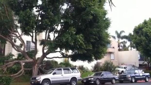[LA] Tree Falls on SUV in Capistrano Beach
