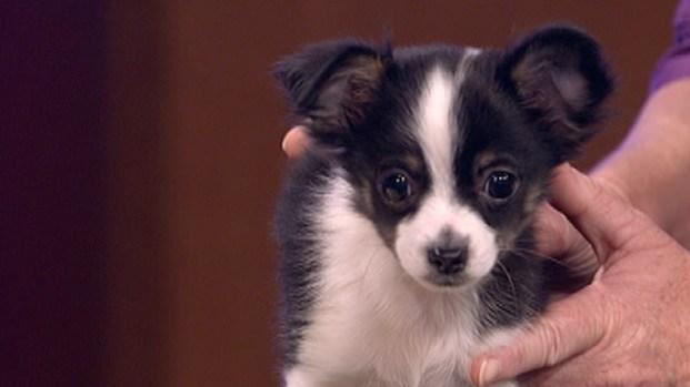 [LA] LA Animal Services Plans Post-Rose Parade Adoption Event