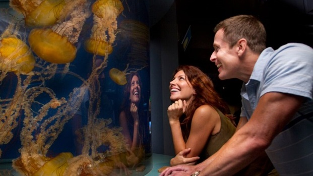 Jellies: New Aquarium of the Pacific Exhibits Debut