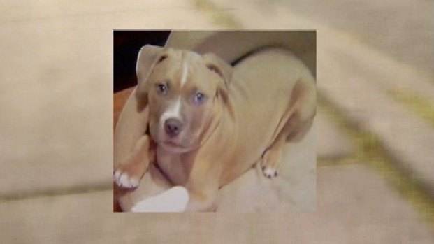 [CHI] Off-Duty Officer Shoots Neighbor's Dog