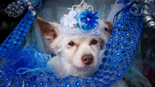 Royal Pups Ruled Over an Adorable Puppy Prom