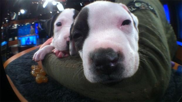 Puppies Visit the NBC4 News at Noon
