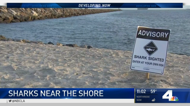 Multiple Sharks Spotted Off SoCal Shores