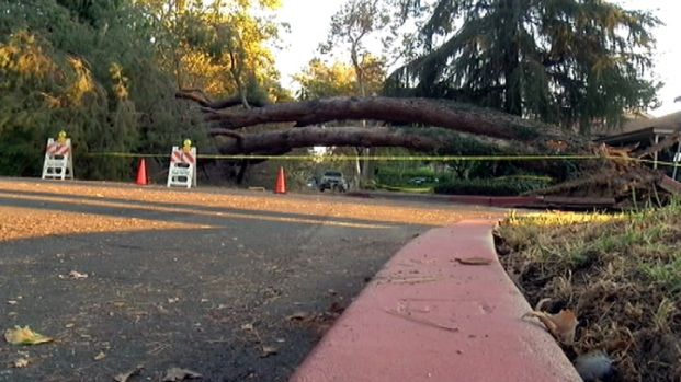 [LA] Snap, Crack, Boom: Resident Describes Toppled Tree