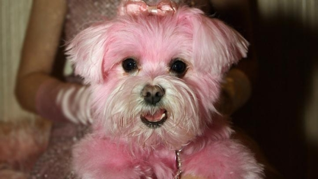 Pets Sport New Hues for the Holidays