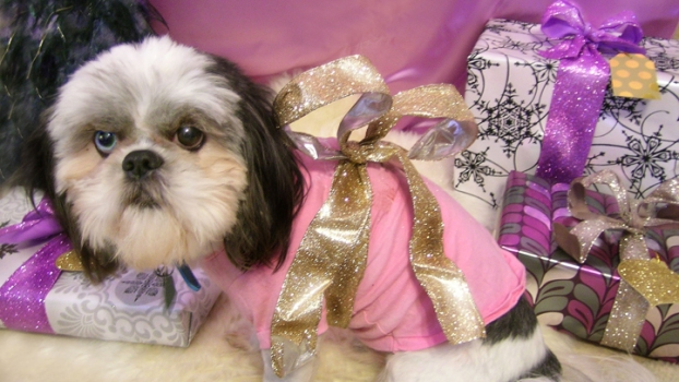 Pamper Your Pooch This Holiday Season