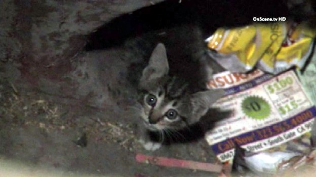 [LA] Cat Whisperer Firefighter Saves Kitten From Storm Drain