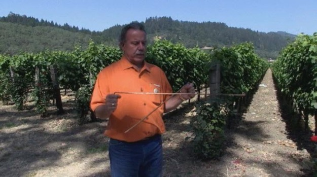"[BAY] Winemaker Stands by ""Water Witching"" to Help During Drought"