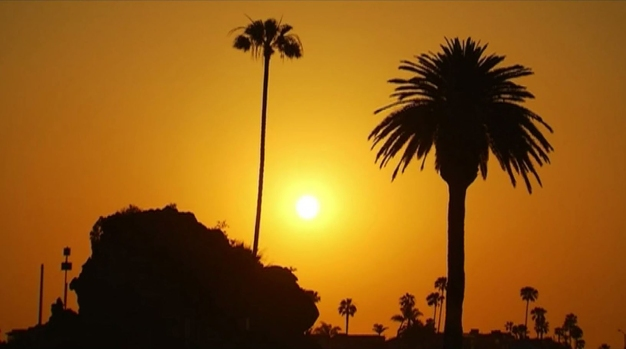 [LA] The LA You May Not Know: The Trees of LA