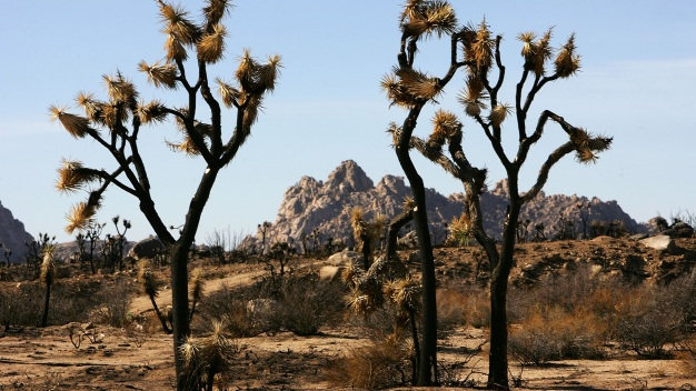 Search For Missing Canadian Hiker in Joshua Tree Scaled Back