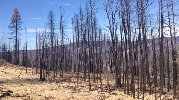 Forest Service Plans to Let Some Blazes Burn