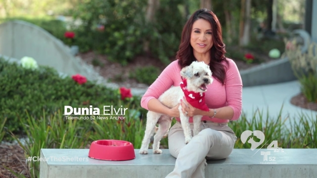 Join NBC4 and Telemundo 52 and Adopt a Pet from a Local Shelter on August 15