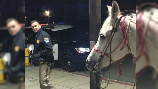 Drunk Man Arrested After Riding Horse Onto 91 Freeway: CHP