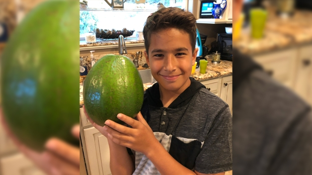 Big Avocado Earns Hawaii Family Guinness World Records Honor