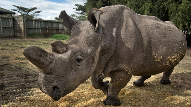 Hackers Fight Wildlife Trafficking at San Diego Zoo Safari Park
