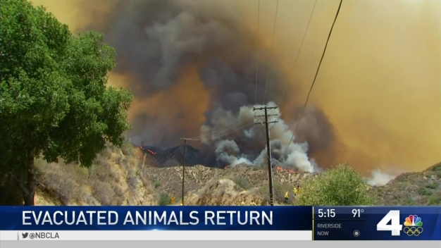 Animals Evacuated Due to Sand Fire Return Home