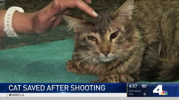 Cat Survives Multiple BB Gun Shots to the Head