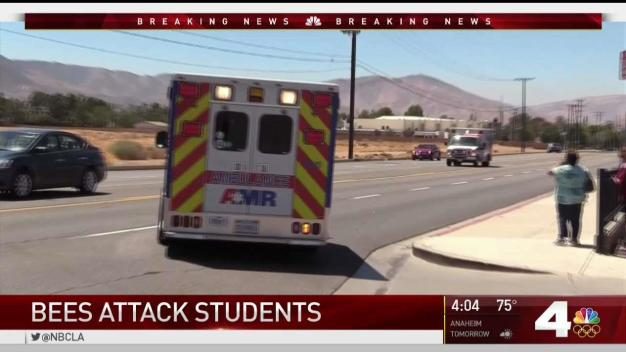 Bees Attack Students in Palmdale