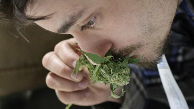 Report: Legal Marijuana Boosts Government Revenue - a Little