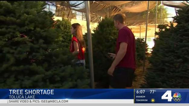 Christmas Tree Shortage Reported