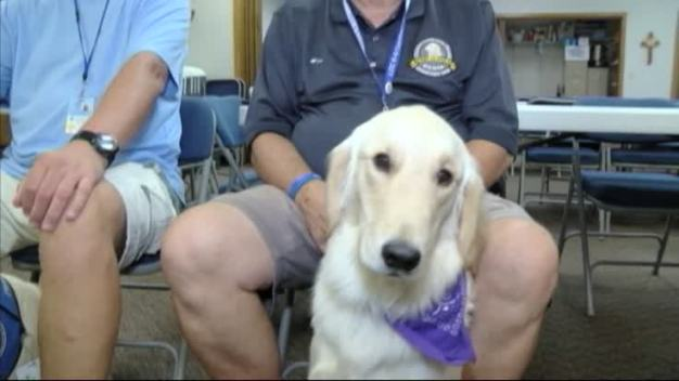 Wounded Comfort Dogs on the Mend