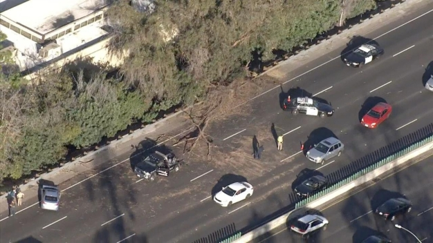 Wind Knocks Down Tree on 101 Freeway, Damaging Cars