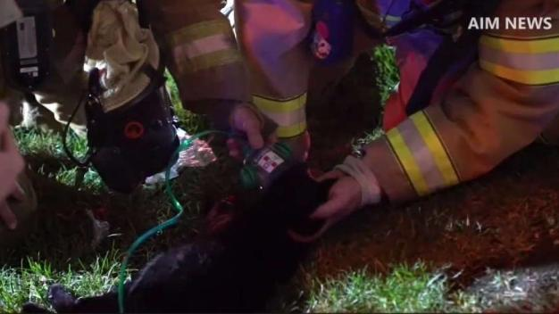 Firefighters Save Family Pet