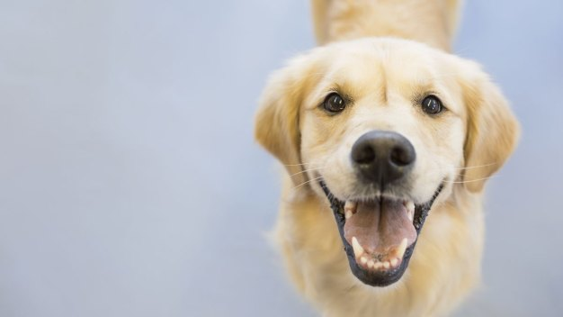 Match for Mutts? Website Helps People Adopt the Best Dog