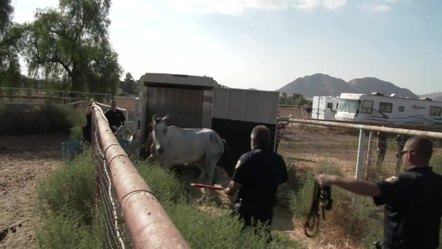 Horse Rescued From Riverside County Ranch