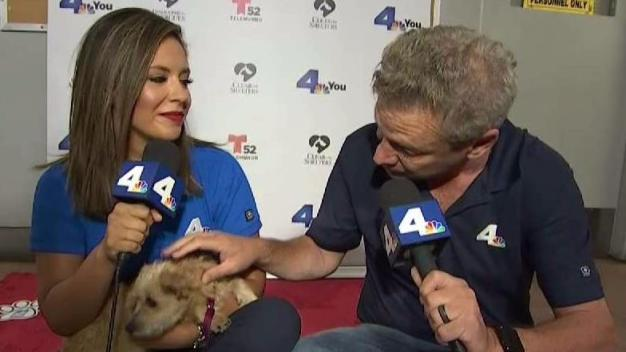 Clear the Shelters: Fred, Daniella Visit East Valley Shelter