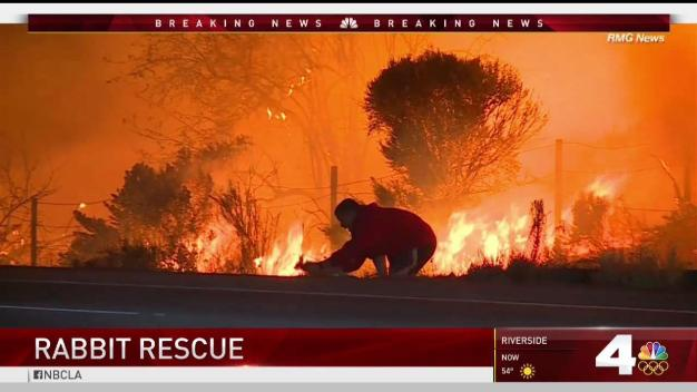Meet The Man Who Saved a Rabbit From a SoCal Fire