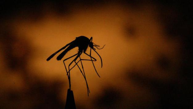 Scientists to Unleash 20 Million Mosquitoes in Fresno County