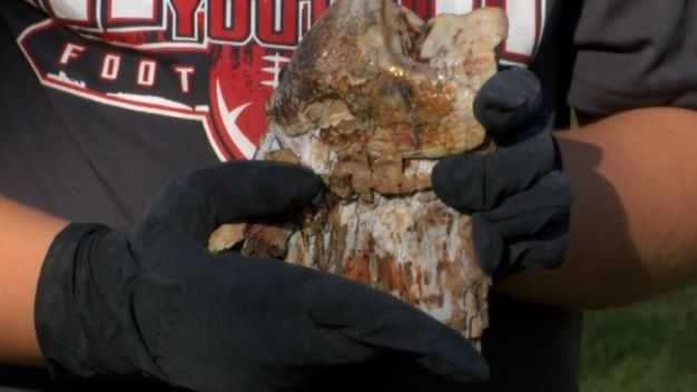 Backyard Bonanza: Boy Finds Mastodon Tooth