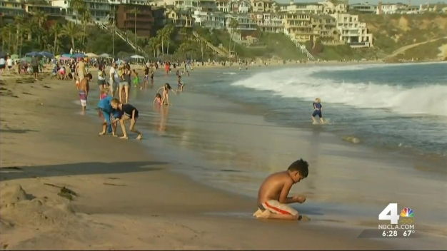 Newport Beach Shoreline Closed After Swimmer Bitten
