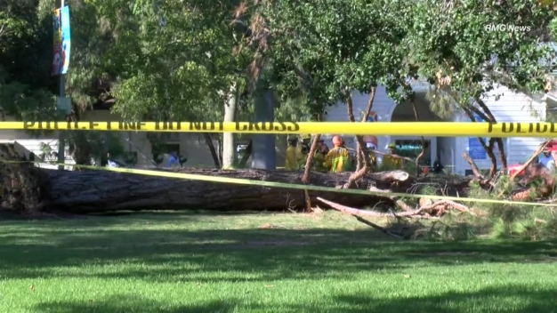 Drought Sparks New Concerns of Falling Trees