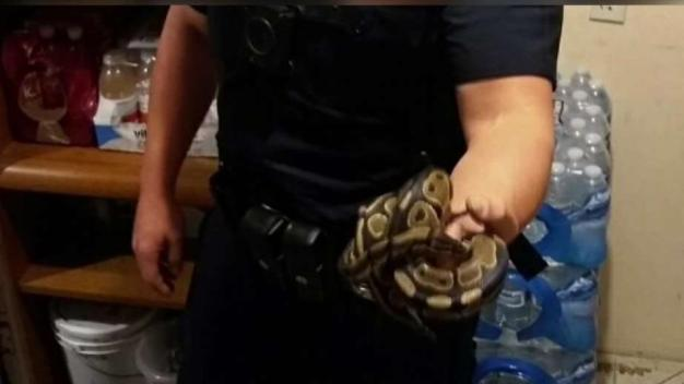 Snake Surprises Couple in Santa Ana