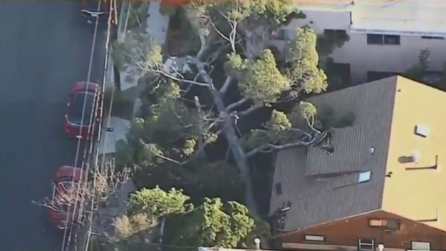 Winds Knock Down Trees Across Southern California
