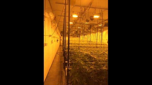 $7.5M Worth of Marijuana Seized From Growing Operation