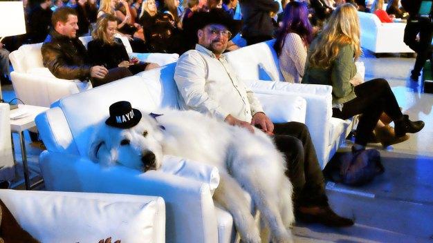 Duke the Dog Wins 3rd Term as Mayor of Minn. Town