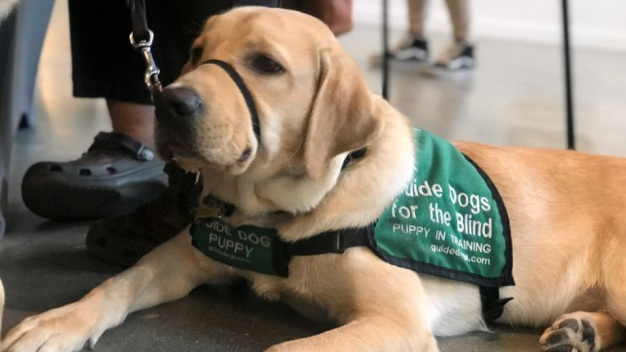 Having a Bad Day? Look at a Guide Dog Retirement Party