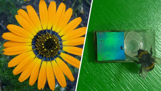 Flowers Create Blue Halo to Attract Bees: Study