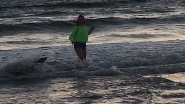 Sea Lion Charges and Bites Teen in Water at Pismo Beach