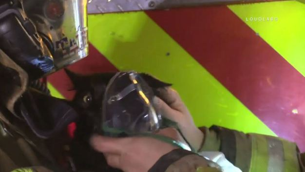Firefighters Comfort Cat Rescued From Burning Home