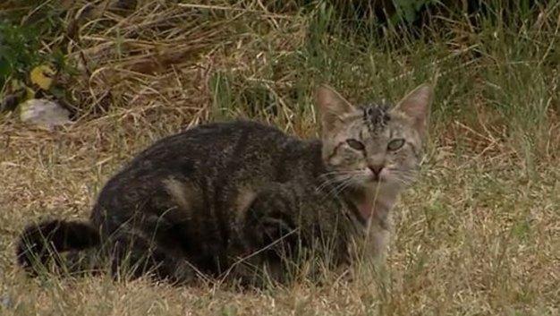 Stray Cats Using Zoo Facilities as Litter Box