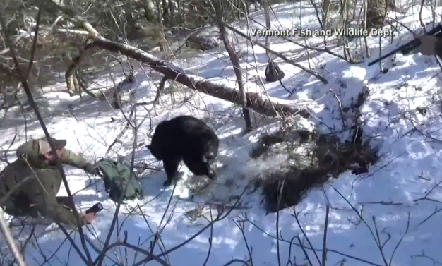 Bear Surprises Researchers