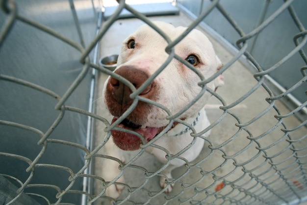 LA's Shelter Dogs Could Go Vegan