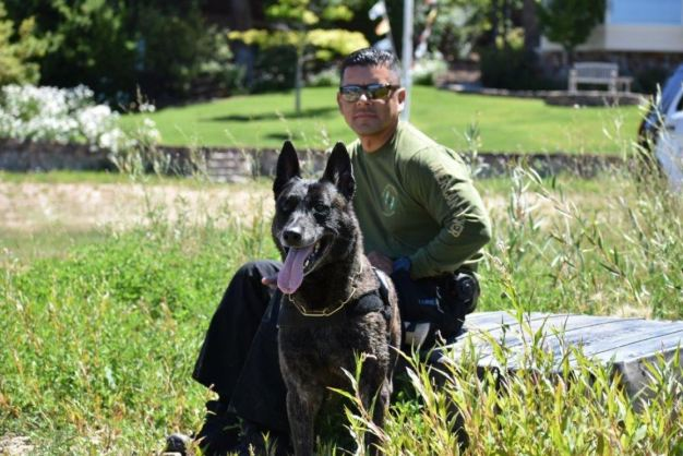 K-9 Injured in Arrest has Setback, Needs Another Surgery